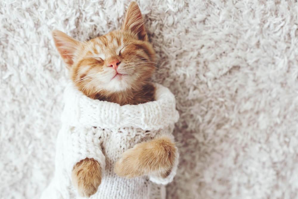 A tu gato no le gusta el frío