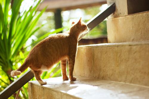 Gato pierde una pata