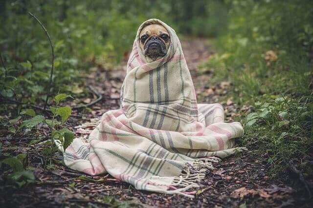 Prevención y cuidados de la gripe en perros