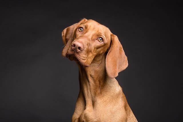 Influencia de la alimentación en la salud de la piel de los perros