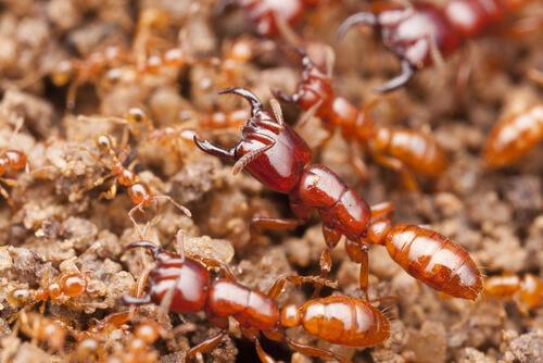 Los insectos asesinos más letales del mundo