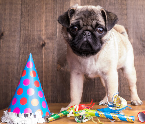 Juegos para cumpleaños de perros