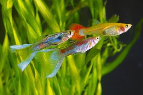 La contaminación lumínica hace que los peces sean más valientes