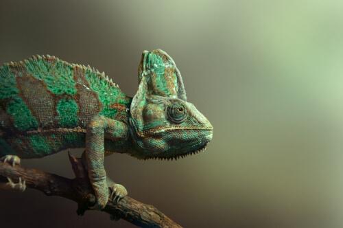 La inteligencia de los reptiles y anfibios