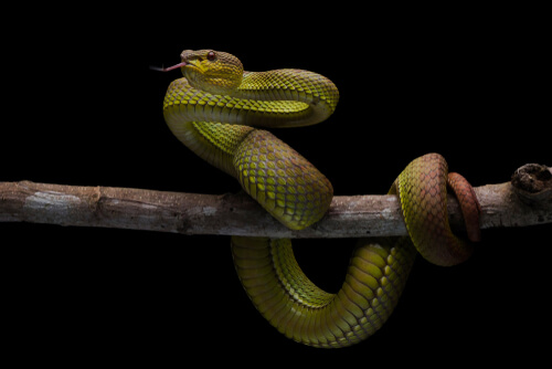 La inteligencia de los reptiles