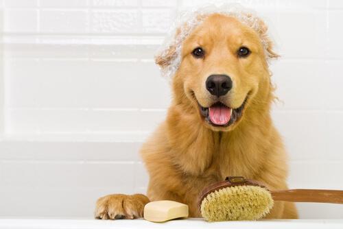 Lavar el pelo al perro