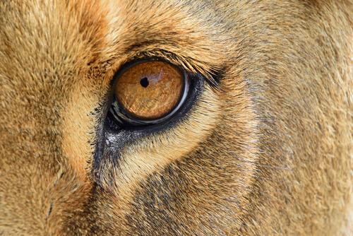 El rey león: inspiraciones detrás de la película