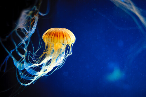 Medusas: reproducción y alimentación