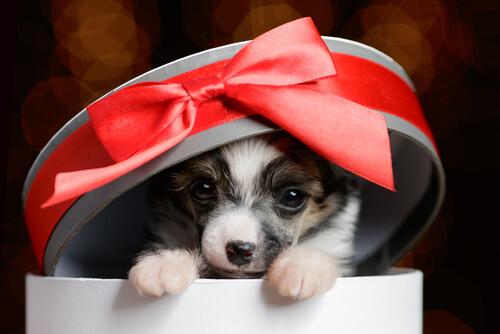 Mascota como regalo