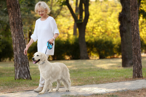 Mascota ayuda a combatir la soledad