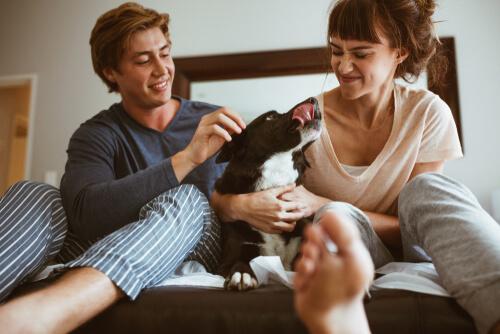 Mimar a tu perro