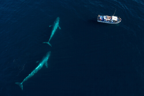 Nacimiento de la ballena azul