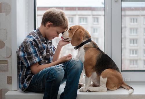 Origen de los beagles