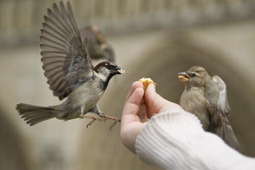 Pájaros comiendo