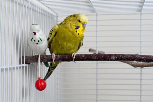Parásitos en aves domésticas
