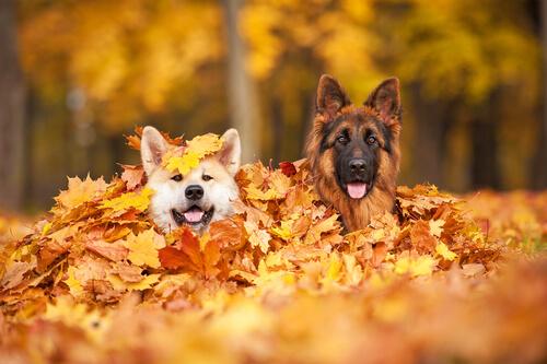 Pasear a tu perro en otoño