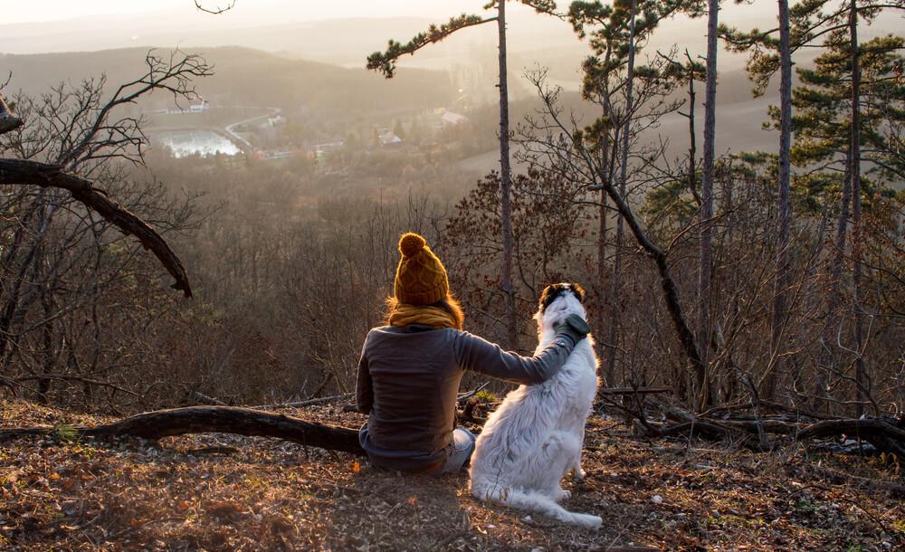 Paseos con tu perro por el bosque.