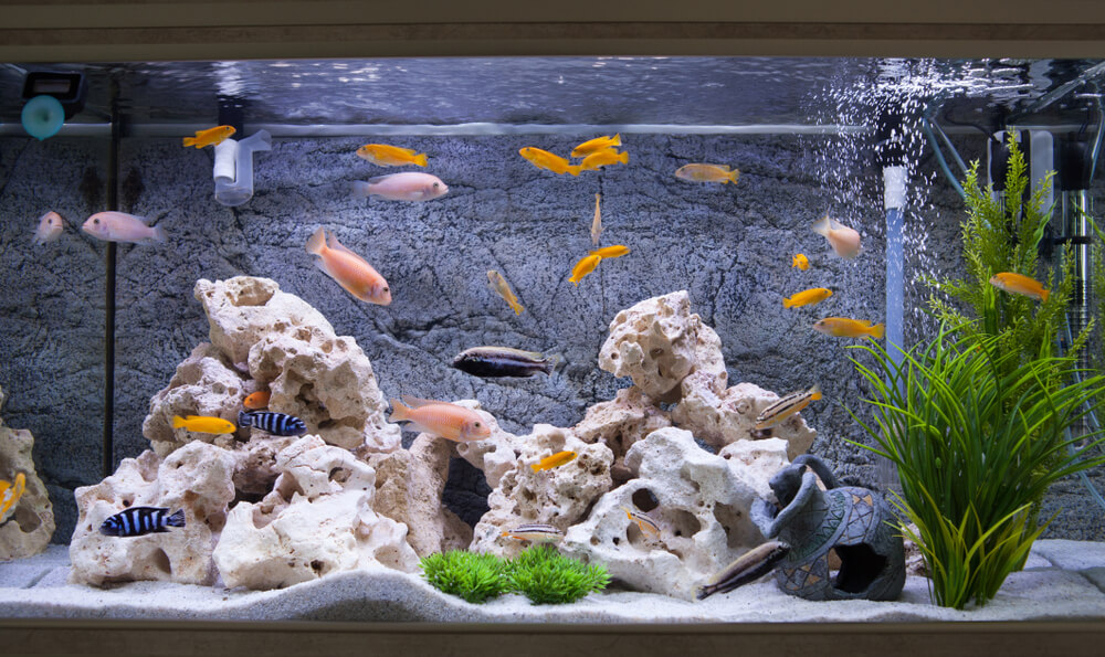 Peces en acuario.