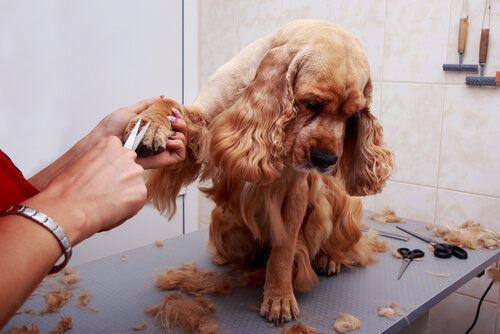 Peluquero canino profesional