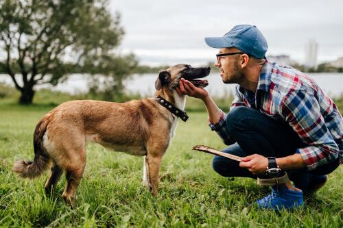 ¿Cómo elegir el perro más adecuado para ti?