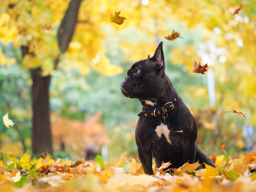 Perro en otoño.