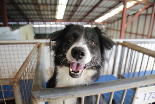 Adoptar un perro que fue abandonado: aspectos a tener en cuenta