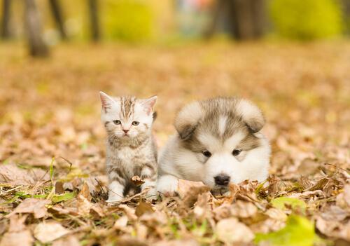 Perro y gato en la estación otoñal