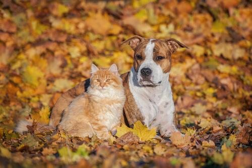 Perro y gato en periodo otoñal