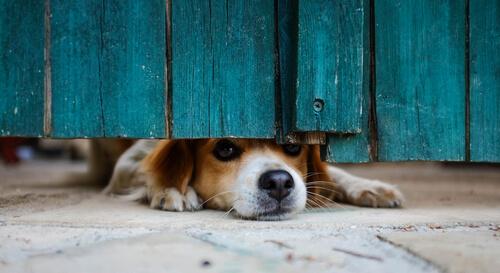 ¿Perros con miedo a las puertas abiertas?