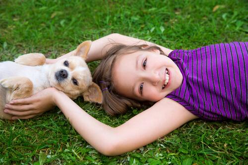 Principales accidentes en casa con los perros de raza pequeña