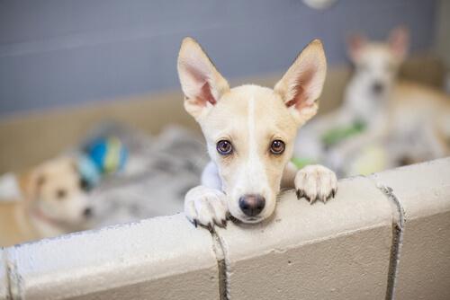 Procedencia de un perro abandonado