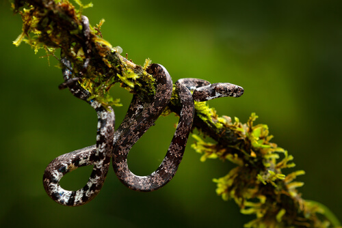 ¿Qué comen las serpientes descubiertas en Ecuador?