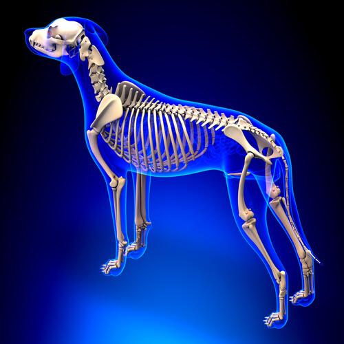¿Qué hace que un mamífero sea un mamífero?