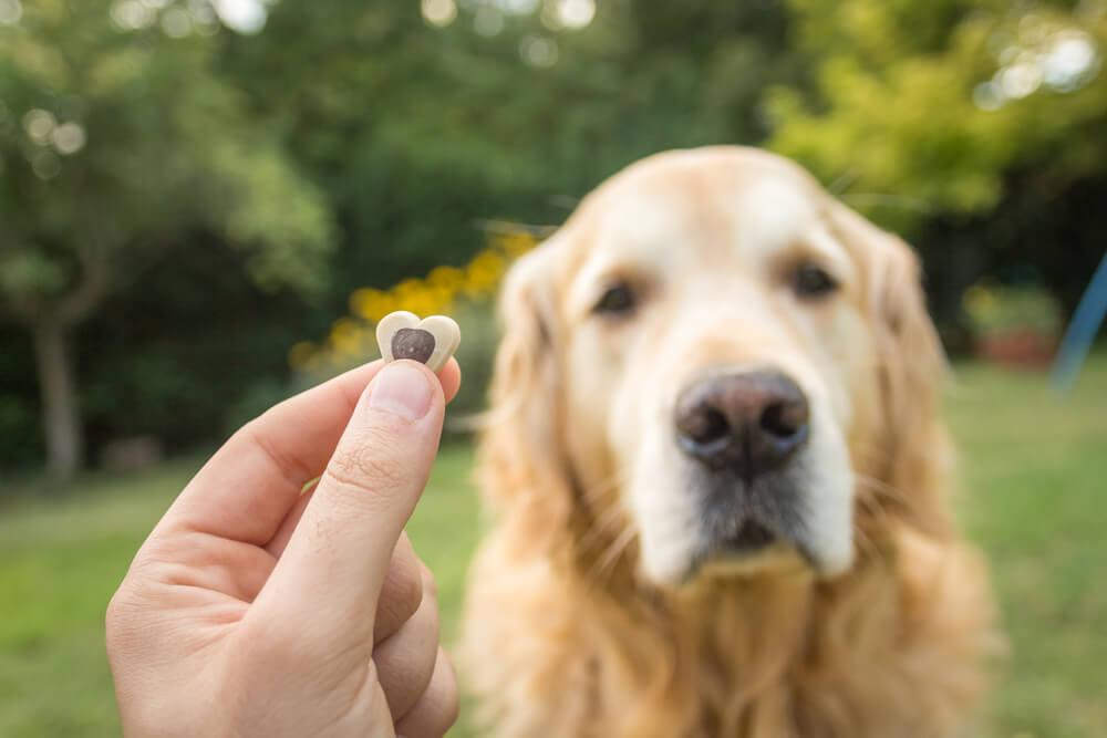 Refuerzo positivo en un perro.