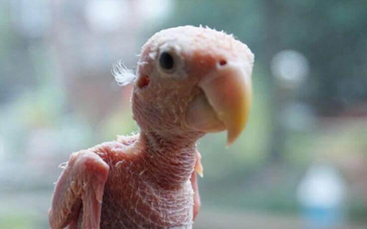 Rhea, el pájaro sin plumas.