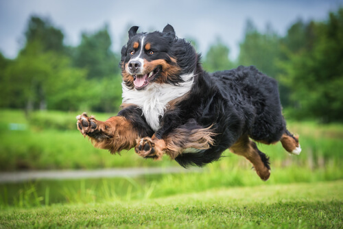Salud articular en las mascotas: todo lo que debes saber