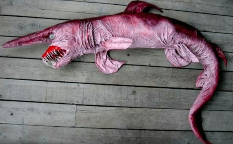 Tiburón duende sobre la mesa.