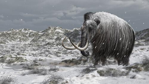 La historia de los últimos mamuts