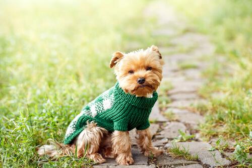 Ventajas de tener un perro pequeño en casa