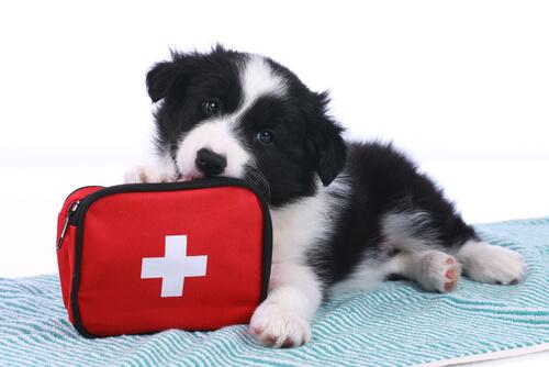Los accidentes en mascotas más frecuentes