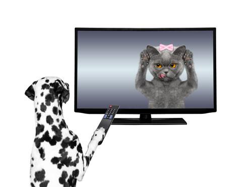 Animales en spots televisivos
