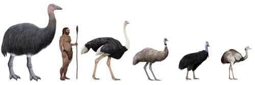 El vorombe es el ave más grande de la historia.