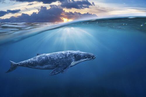 El estrés de las ballenas en la Segunda Guerra Mundial