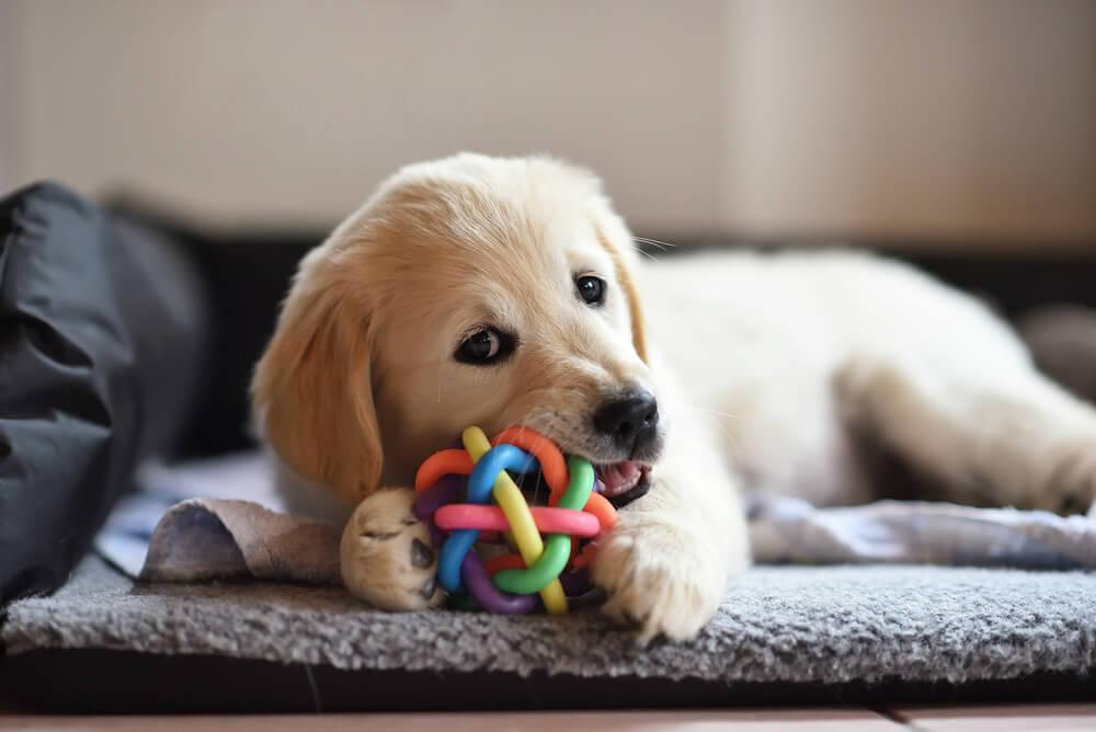 Cachorro jugando.