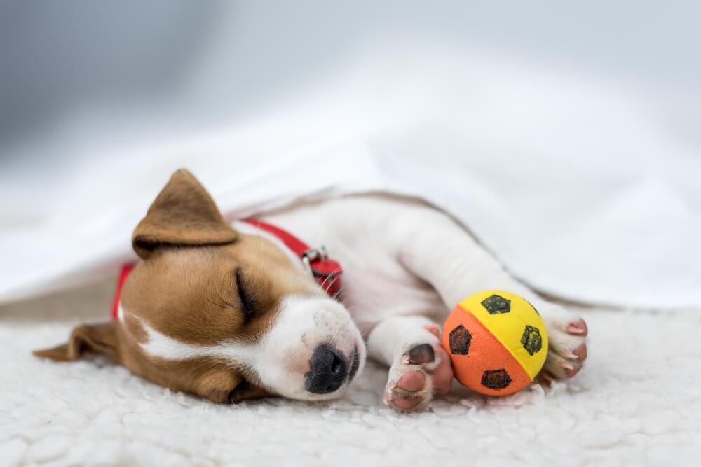 Cachorro con una pelota.