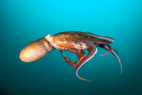Avistamientos de calamares gigantes en el mundo