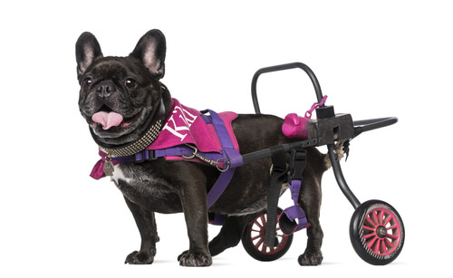Carros para perros
