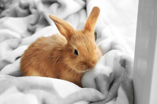 Conejos enanos: cuidados básicos
