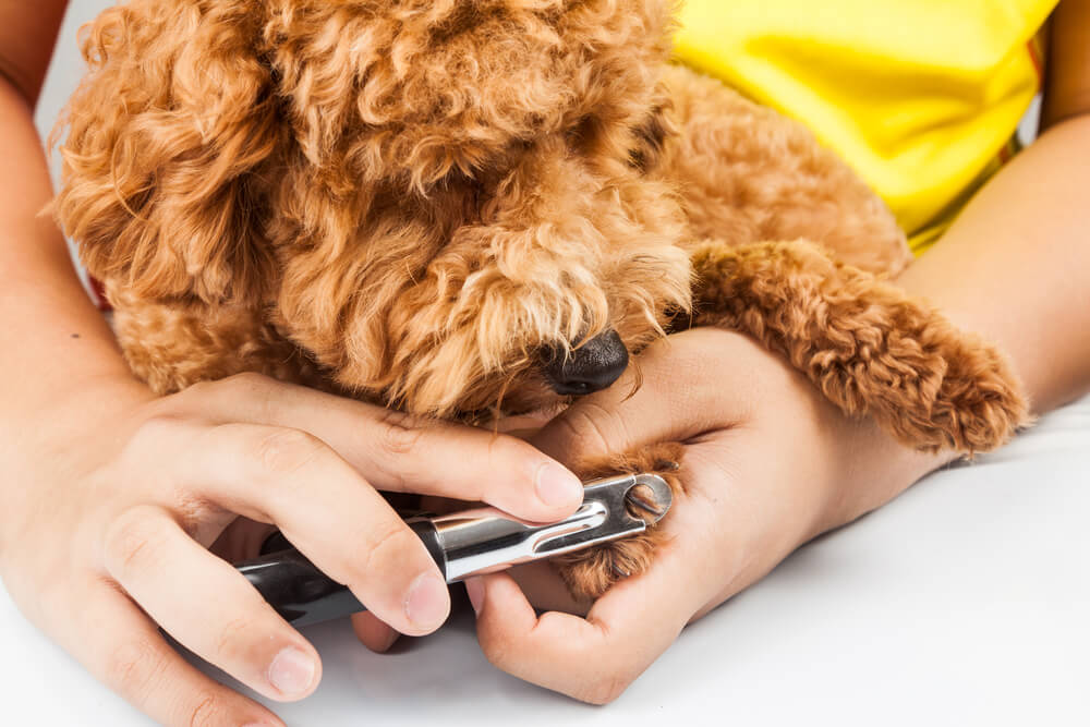 Cortar las uñas a tu perro.