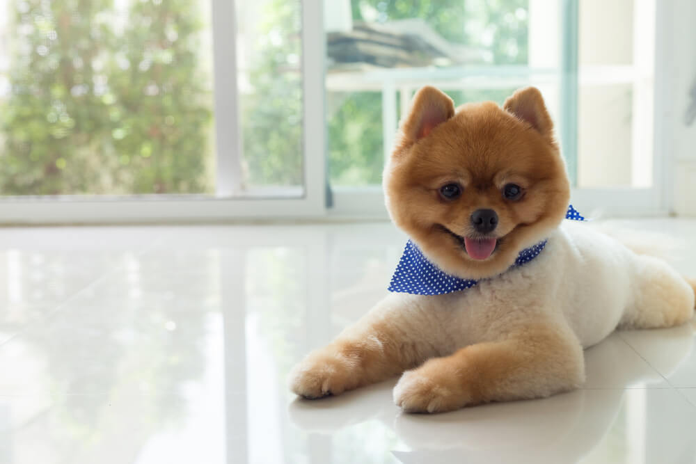 Cortes y peinados especiales para perros